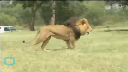 New York Woman Killed by Lion in South Africa 'lived a Life of Adventure'