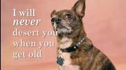 Поема до моето куче