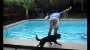На басейн с куче