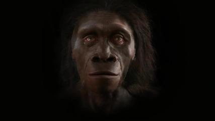 Еволюцията на човешкия вид в 2 минути