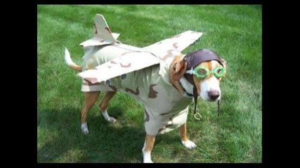 Смешни картинки на кучета и котки