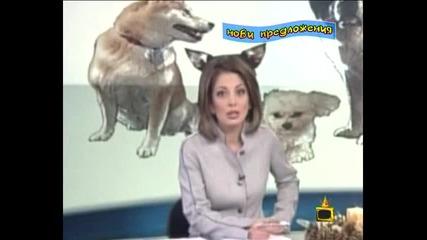 кучешките уши на Даниела Тренчева