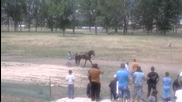 Невероятно! 17-годишен кон става първи! - Jet De Landemer