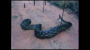 Змия Която Тежи 1, 7тона