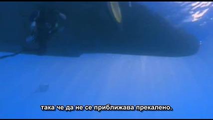 Преследван от морско чудовище - Базилозавър