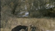 Атака на Вълнест носорог