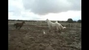 Horses Running in a Muddy Corral