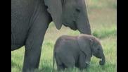 Колко Слончето Тежи? - Песнички От Детството