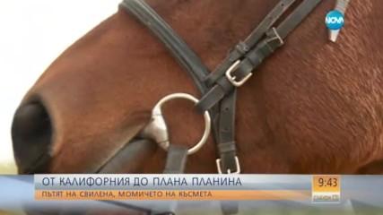 Защо една жена остави кариера в САЩ и се върна в България да отглежда коне?