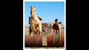 Horse Tribute...again..
