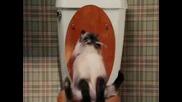 От създателите на Страшен филм - Date Movie Котка с диария