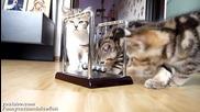 Котенца се учат на физика ..