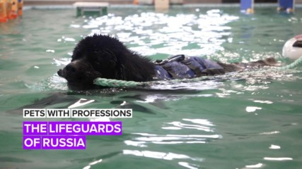 Pets with Professions: The K9 lifeguards who literally doggy paddle