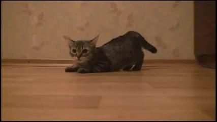 Котка спринтьор - смях