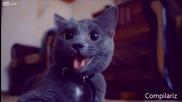 Най-лудите котки събрани в едно клипче
