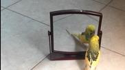 Роко хубавеца :)