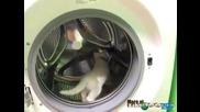 Котешки фитнес в пералнята