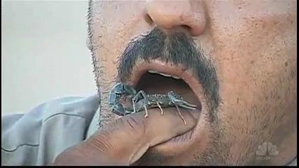 Индиец яде живи скорпион
