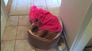 Кученце само взима баня, подсушава се и ляга да спи