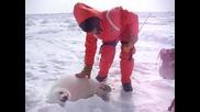 Baby тюленчета