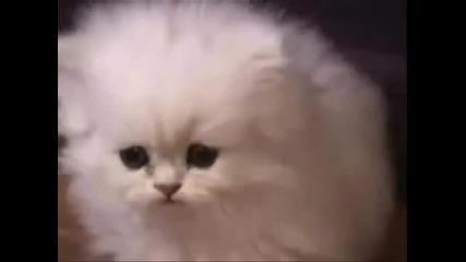 Смях Котка се Оригва