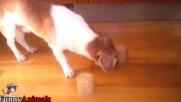 Забавна игра с кучета и котки