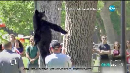 2-годишна мечка пада от дърво в САЩ