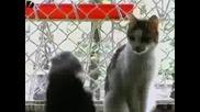 Жена жижее с 130 котки