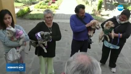 В Мексико носиха домашни любимци в църквите, за да бъдат блaгословени