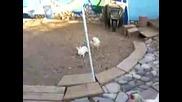Битка: Отбор Зайци Vs. Отбор Кокошки