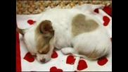 Сладурчето Харт - Кун, родило се със сърчице на гръбчето