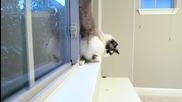 Котка овладя лунната походка на Джако