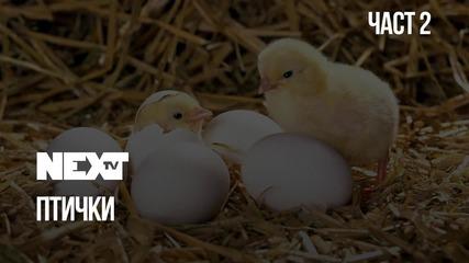 NEXTTV 040: Птички (Част 2)