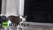 Великобритания: МаяУХ! Котката на министъра Камерън бе сритана от полицай по време на посещение