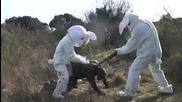 Отмъщението на зайците