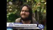 800 Kg Сух Канабис Откриха Криминалисти