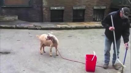 Смешни Кози ..