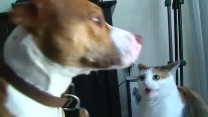 Зла котка изтезава куче