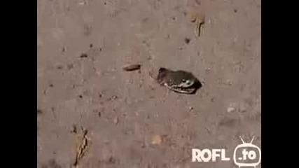 Шокиращо!змия Е Жива Със Отрязана Глава