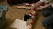 Как да опаковаме котка за Коледа