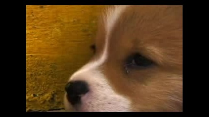 Сладко Кученце