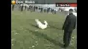 Kangal Attack