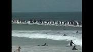 Над 100 сърфисти яхнаха вълна по едно и също време