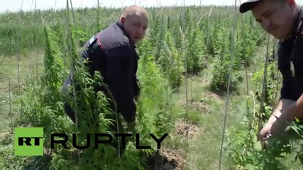Russia: Crimean police seize $3.5 million worth of marijuana