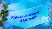 Планета на цветята - синя магия! ... ...