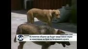 В Столична община ще бъдат представени мерки за намаляване на броя на бездомните кучета
