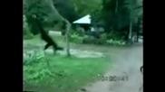 Маймуна Срещу Куче