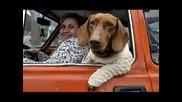 Задължително гледайте - кучето е най-добрия приятел на човека.