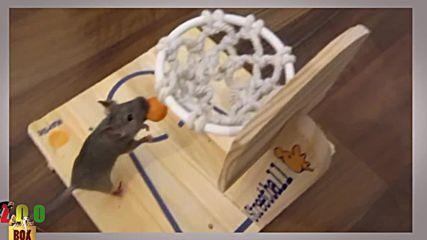 Мишка лекоатлет, баскетболист и математик :D Определено не са глупави