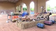 Thailand: 40 dead tiger cubs found at Buddhist temple in Kanchanaburi